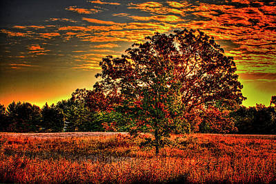 Photograph - Maple Tree On An Illinois Priaire Early Autumn by Roger Passman