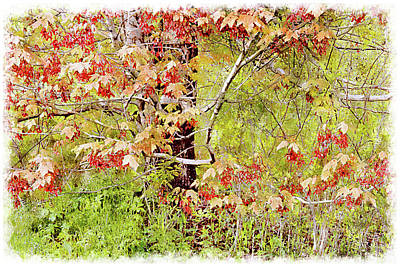 Digital Art - Maple Tree W C  by Peter J Sucy
