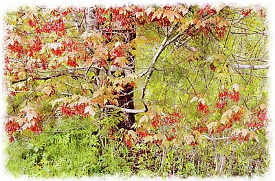 Digital Art - Maple Tree W C  by Peter J Sucy