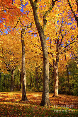 Photograph - Maple Treo by Scott Kemper