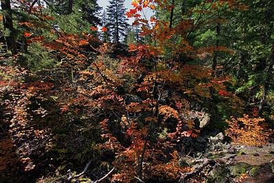 Photograph - Maple Vine In Fall Season by David Gn