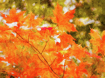 Photograph - Mapleicious by Leslie Montgomery