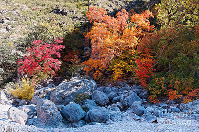 Photograph - Maples And Boulders In A Play Of Lights And Shadows - Mckittrick Canyon Guadalupe Mountains by Silvio Ligutti