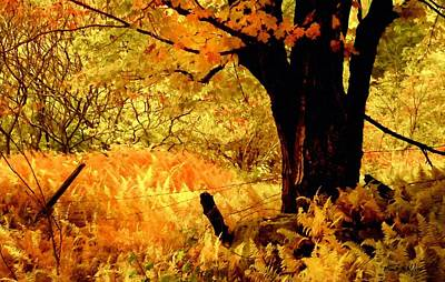 Photograph - Maples Ferns And Barbed Wire by Frank Wilson
