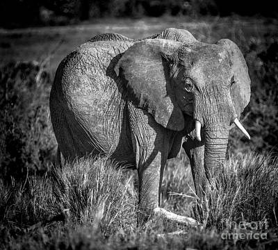 Photograph - Mara Elephant by Karen Lewis