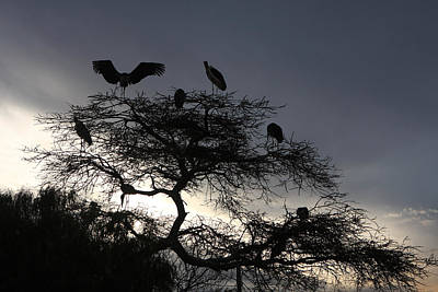 Photograph - Marabou Stork Come Home To Roost by Aidan Moran