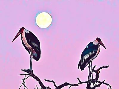Photograph - Marabou Stork by Gini Moore