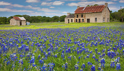 Photograph - Marble Falls Bluebonnets by Inge Johnsson