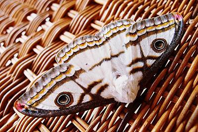 Photograph - Marbled Emperor by Dora Hathazi Mendes