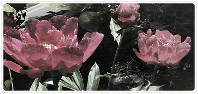 Photograph - Marbled Pink by Mario MJ Perron