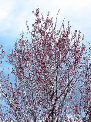 Photograph - March Blossoms,winds And Storms by Phyllis Kaltenbach