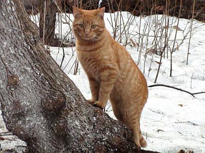 Pyrography - March Cat by Sergey Lukashin