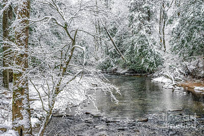 Photograph - March Day Along Cranberry River by Thomas R Fletcher