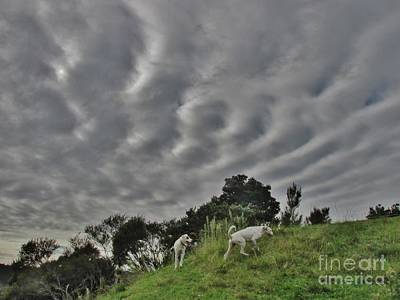 Photograph - March Sky Ripple Frequencies by Dianne Connolly