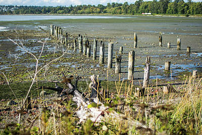 Photograph - March Of Pilings by Tom Cochran