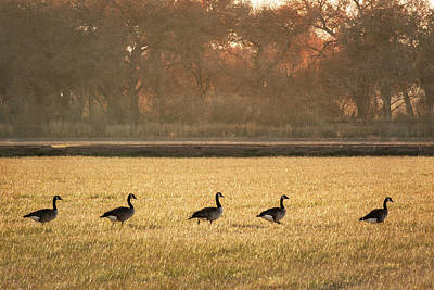 Photograph - March Of The Geese by Mary Lee Dereske