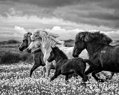 Photograph - March Of The Mares by Joan Davis