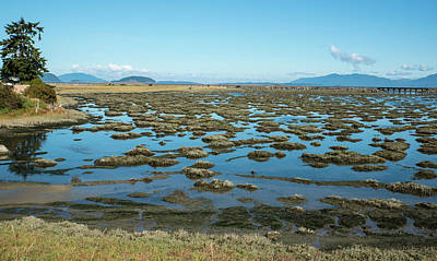 Photograph - March Point Road Mudflats by Tom Cochran