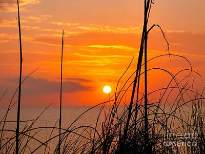Photograph - March Sunset by Jean Wright