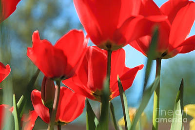 Photograph - March Tulips by Jeanette French
