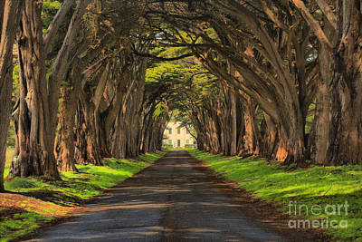 Photograph - Marconi Station Cypres Tunnel by Adam Jewell