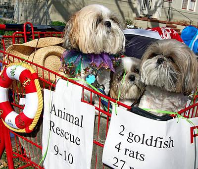 Kathleen Photograph - Mardi Gras Pekingese Pups by Kathleen K Parker