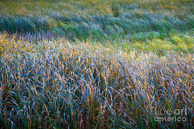 Photograph - Mardi Grass by Susan Cole Kelly