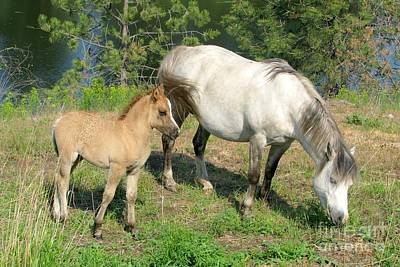 Photograph - Mare And Colt by Frank Townsley