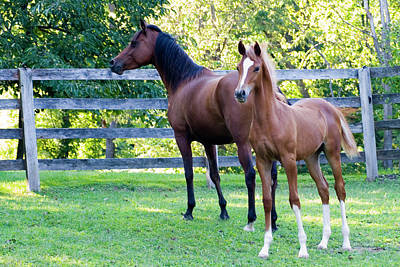 Horses Photograph - Mare And Colt by Michael Barry
