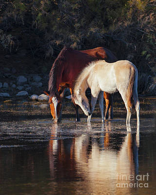 Photograph - Mare And Colt Reflection by Jerry Cowart