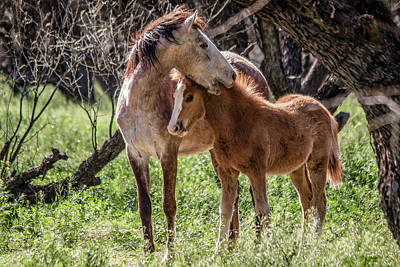 Photograph - Mare And Colt by Teresa Wilson