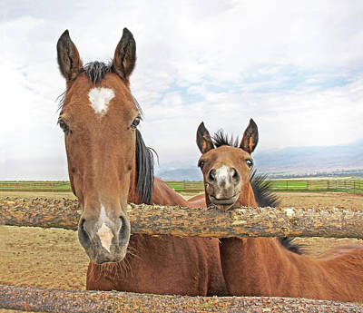 Photograph - Mare And Filly Horses by Jennie Marie Schell