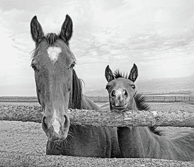 Photograph - Mare And Filly Horses Monochrome by Jennie Marie Schell