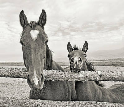 Photograph - Mare And Filly Horses Sepia by Jennie Marie Schell