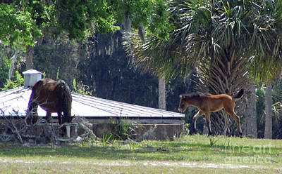 Photograph - Mare And Foal By The Cistern by D Hackett