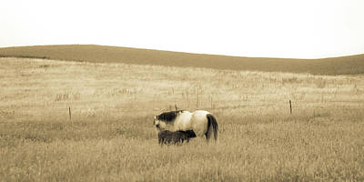 Photograph - Mare And Foal  by Dawn Romine