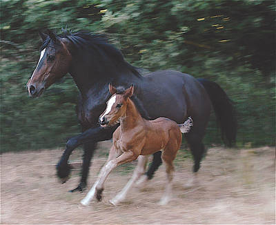 Photograph - Mare And Foal by E Colin Williams ARCA