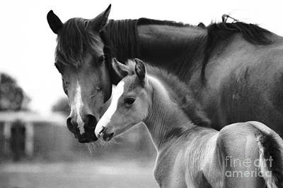 Photograph - Mare And Foal In Black And White by Jim And Emily Bush