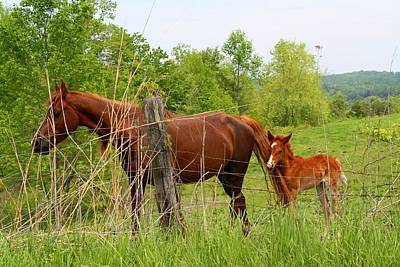 Photograph - Mare And Foal by Kathryn Meyer