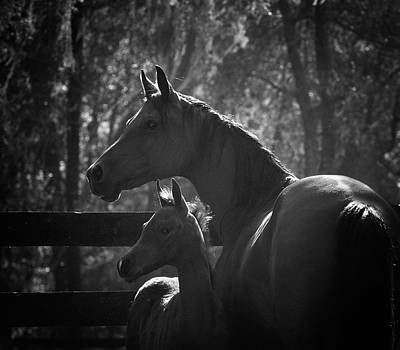 Photograph - Mare And Foal by Pam Kaster
