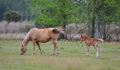 Photograph - Mare And Foal by rd Erickson