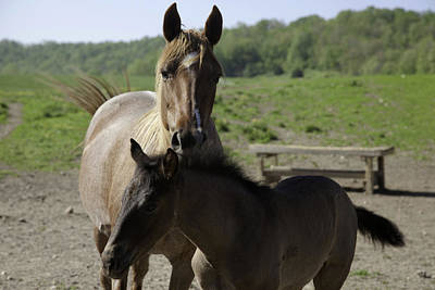 Photograph - Mare And Foal by Scott Sanders