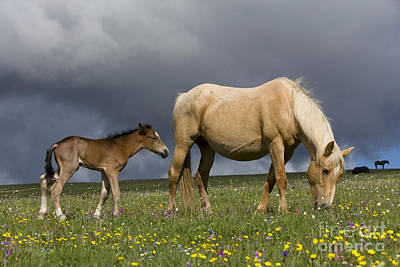 Palomino Foal Photograph - Mare And Her Foal by Jean-Louis Klein & Marie-Luce Hubert