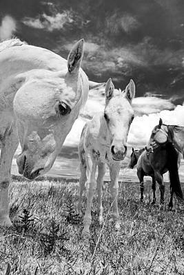 Working Cowboy Photograph - Mare With Colt by Charles Frates