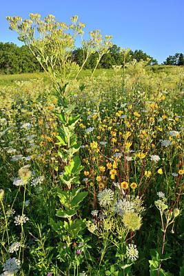 Photograph - Marengo Ridge Hillside Of Wildflowers by Ray Mathis