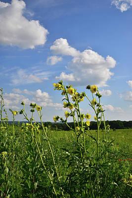 Photograph - Marengo Ridge Sunflowers by Ray Mathis
