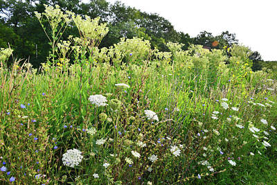 Photograph - Marengo Ridge Wildflower Garden by Ray Mathis