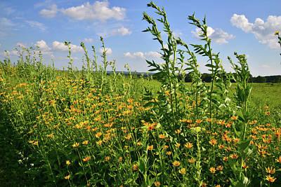Photograph - Marengo Ridge Wildflowers by Ray Mathis