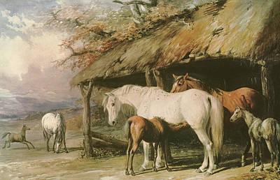 Mares And Foals Art Print