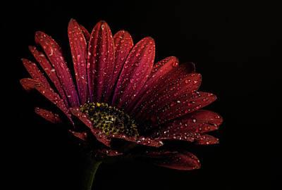 Photograph - Margarita Rioja Red by Erica Kinsella